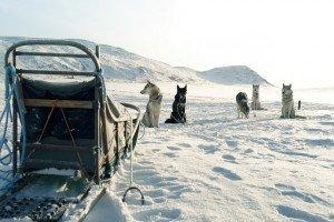 Dog-sledding in Finland
