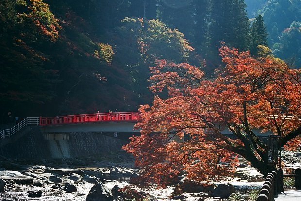 Taigetsukyo Bridge is a good place for admiring the view at Korankei Valley. Photo by bryan... / CC BY-SA 2.0
