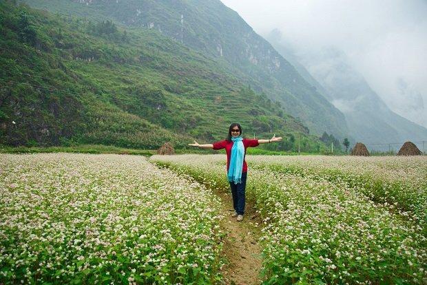Fields of buckwheat flowers in bloom in Vietnam.