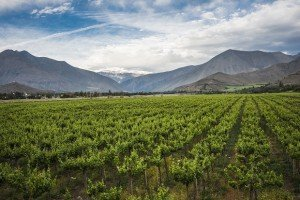 Elqui Valley in the Andes part of Atacama, Chile